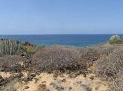 Dove andare vivere Tenerife?