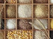 Expo Milano 2015 Cluster Cereali Tuberi