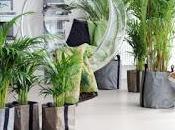 piante d'appartamento purificano l'aria