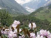 Uttarakhand Valley Flowers, 'Gran Paradiso' dell'Himalaya