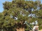 Funghi parassiti dell'olivo