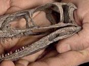 Scoperto Eodromaeus, primitivo antenato Tirannosauro