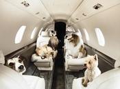 compagnie aeree accettano animali domestici