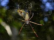 vita segreta ragni