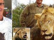Cecil: leone ucciso dentista americano nello Zimbabwe.A