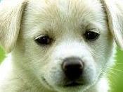 Quattro cuccioli legati abbandonati. Arrestata donna anni