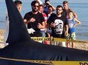 Maxi squalo spiaggia solo pubblicità Sharknado Cinema