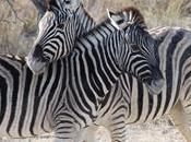 Namibia Discovery l'Etosha