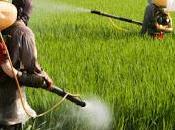 respingono centinaia snack provenienti dall'India eccesso pesticidi, muffe Salmonella