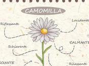Camomilla: ricette bellezza