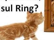 Perché leone palestra, Gattino ring?
