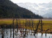 Viaggio Alaska (parte verso Denali ritorno Anchorage