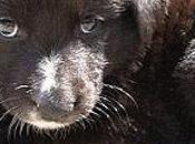 Protesta oipa contro massacro cani moldavia