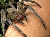 ragno velenoso mondo