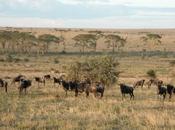 Svezia: mondiale savana, sudafrica sweden: world savannah, south africa