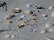 spesso passeggiato sulla riva mare...
