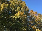Mostre fiori d'autunno