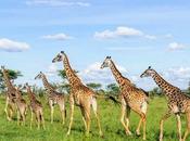 Safari Parco Nazionale Serengeti Viaggio Tanzania