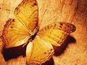 Temi farfalle