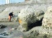 Emerge porto Ostia strutture navi colossali