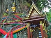randici Bangkok, Ficus Strangolatori Tetrameles Nudiflora
