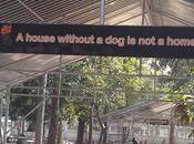 canile cani felici mondo Phuket, Tailandia.