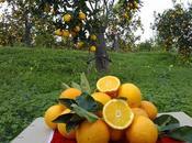 arance Naturalmente Contadini sotto l'albero Natale