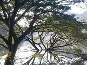 Kandy dintorni templi, laghi piantagioni Viaggio Lanka