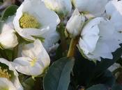 Gennaio: lavori questo mese giardino