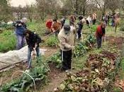 orti producono cibo anche benessere