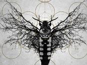 Moth's Circle Flight: dettagli nuovo disco