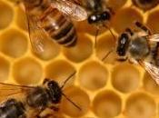 ortise' sole-trentino prima azienda apistica certificata pefc