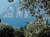 Potatura dell'olivo: formazione olivicoltori garda