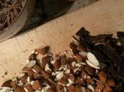 Senza Bimby, Biscotti All-Bran (Bastoncini Crusca)