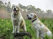 studio rivela cani riconoscono emozioni