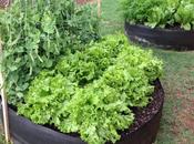 L'orto contenitore pieno campi: meno sprechi verdura