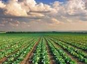 L'innovativa produzione erpici Pastò Agricolture