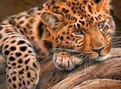 Schema punto croce: Tigre
