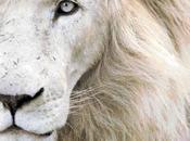 Schema punto croce: Leone bianco