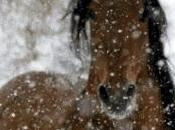Schema punto croce: Cavallo sotto neve