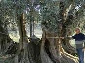 cause stanno provocando morte dell'olivo vecchio 1500 anni Alliste sono spiegabili dalla fede scienza?