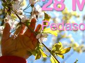 Pedaso Hanami 2016: Pasquetta torna Festa Ciliegi fiore