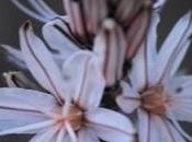 racconto fiore