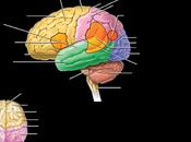 Settimana Cervello 2016: eventi Italia, date significato