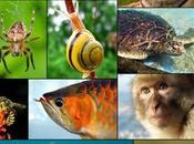 cos'è biodiversità?