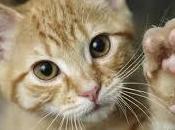 Fattori rischio reni nostro gatto