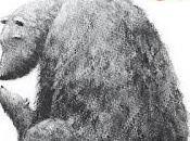 Book Babies [Recensione]: Piccola Orsa Weaver