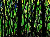 Mangrovia pineto, sempre