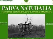 Parva Naturalia, Modena mostra mercato frutti rari, prodotti tipici, antichi mestieri tanta creatività!