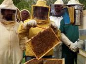 dieci comandamenti dell'apicoltore